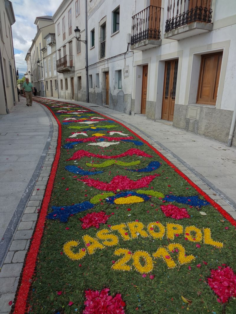 Flower carpet in Castropol