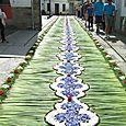 Corpus Christi flower carpets 052
