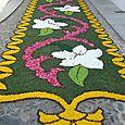 Corpus Christi flower carpets 043