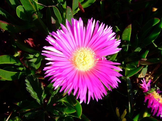 Flower in Galicia